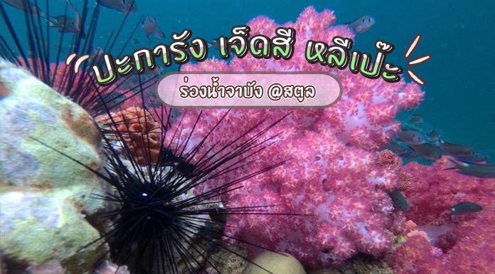 ปะการัง-7-สี